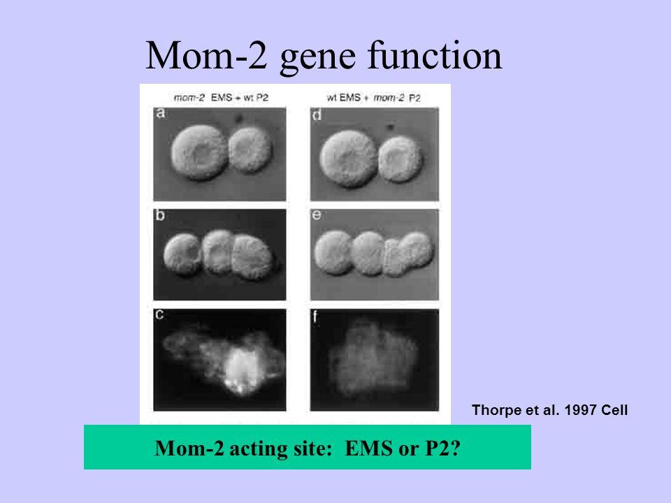 MS mom-2(lf)
