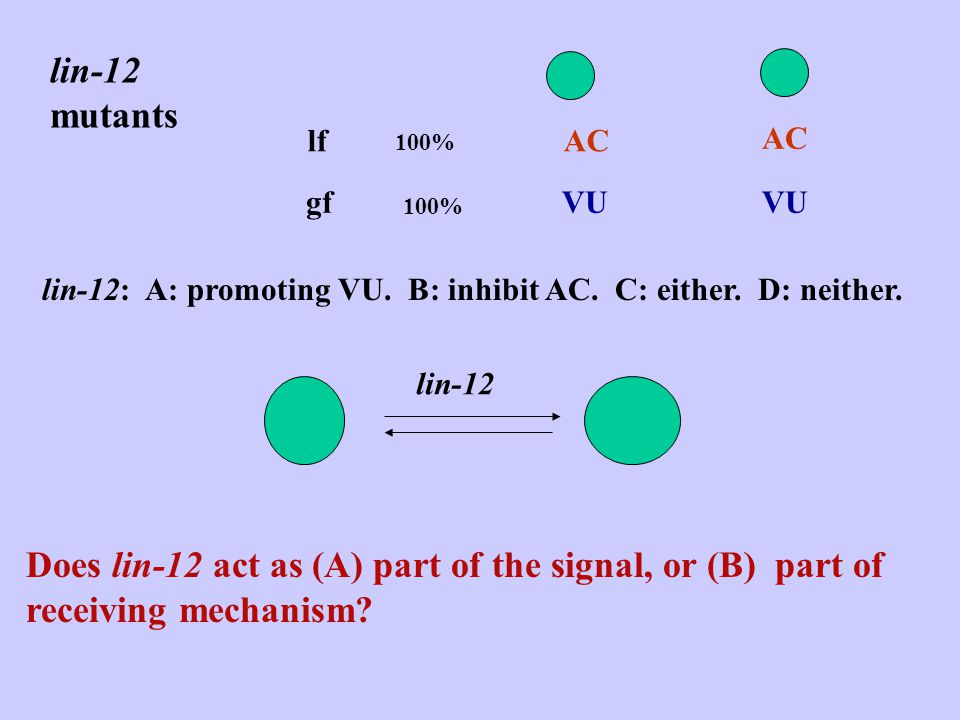 WT Z1.pppZ4.aaa 50%ACVU 50% ACVU ablation AC100% AC100% Lin-12 mutants lfAC100% AC gfVU 100% VU Greenwald et al.
