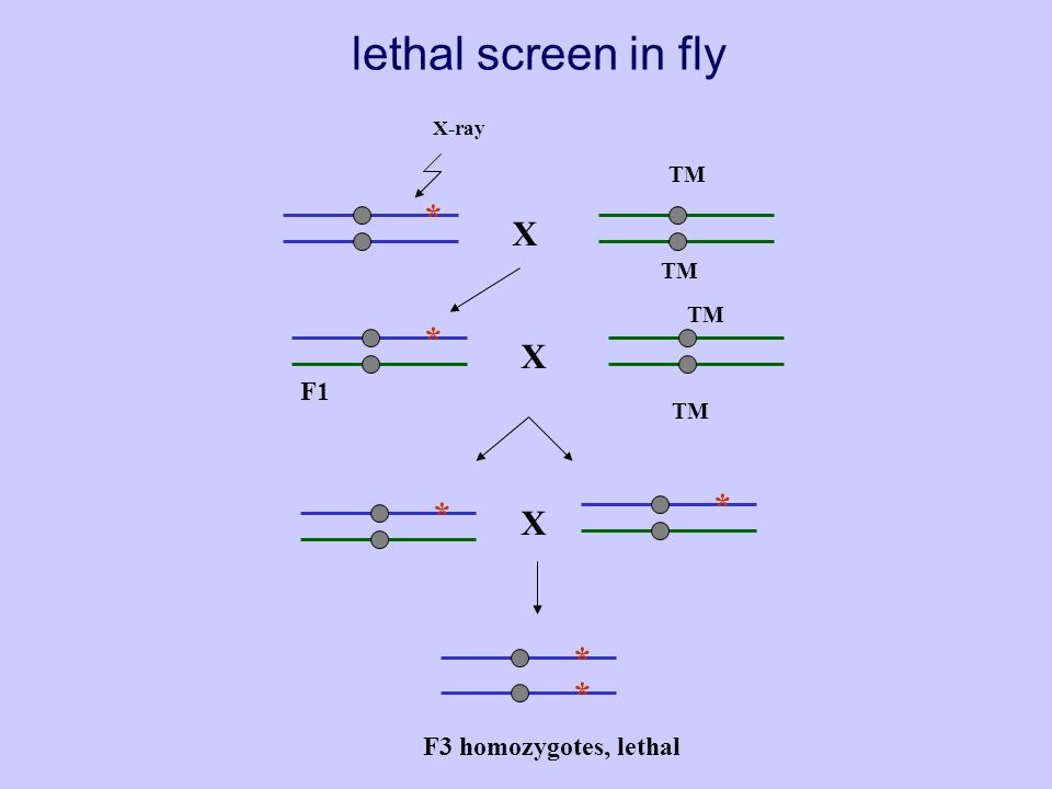 An F1 screen for lethal or sterile mutations.