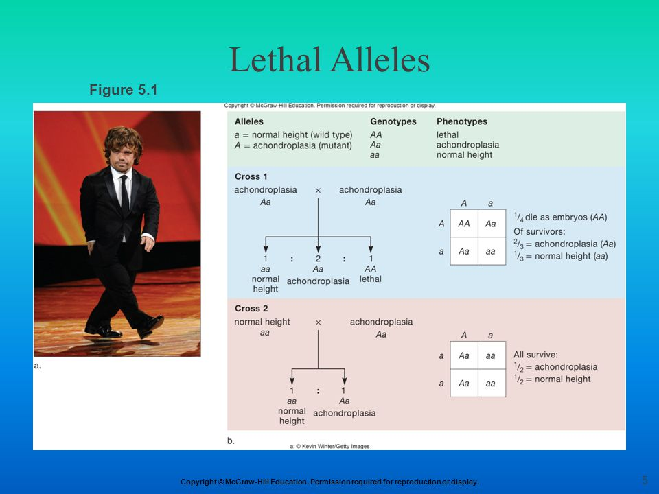 Copyright © McGraw-Hill Education. Permission required for reproduction or display. Figure 5.1 Lethal Alleles 5