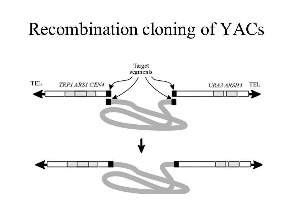 Recombination cloning of YACs