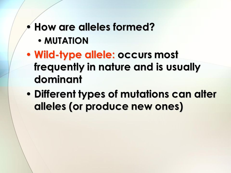 Mutations Loss of function mutation: a mutation that causes the reduction/loss of the specific wild-type function Loss of function mutation: a mutation that causes the reduction/loss of the specific wild-type function If the loss is complete, the mutation has resulted in what is called a null allele If the loss is complete, the mutation has resulted in what is called a null allele Gain of function mutation: a mutation that enhances the function of the wild-type allele Gain of function mutation: a mutation that enhances the function of the wild-type allele