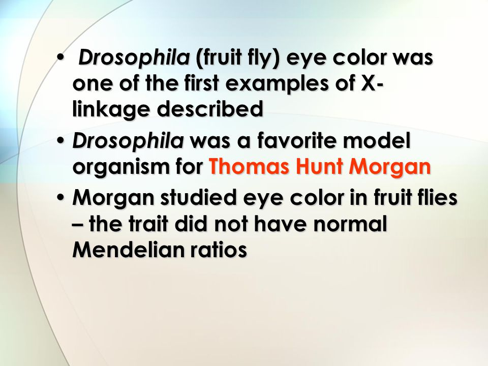 Drosophila (fruit fly) eye color was one of the first examples of X- linkage described Drosophila (fruit fly) eye color was one of the first examples