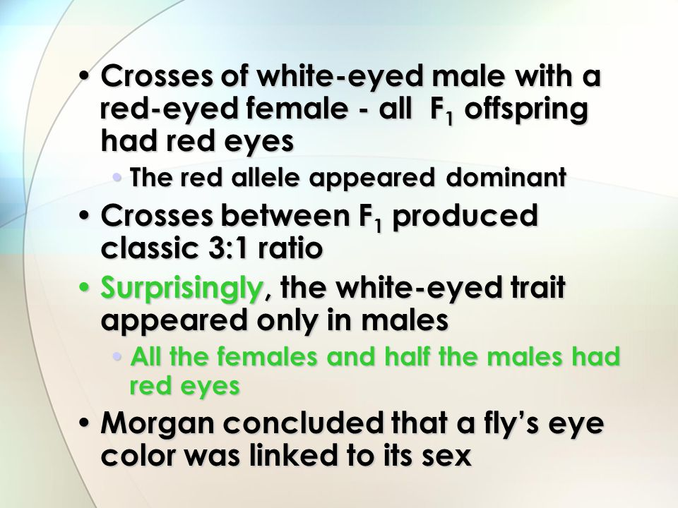 Crosses of white-eyed male with a red-eyed female - all F 1 offspring had red eyes Crosses of white-eyed male with a red-eyed female - all F 1 offspri
