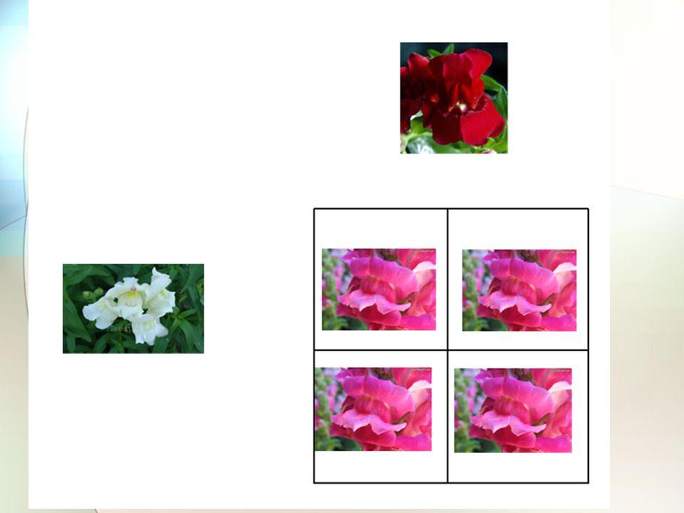 Figure 4-11 Copyright © 2006 Pearson Prentice Hall, Inc.
