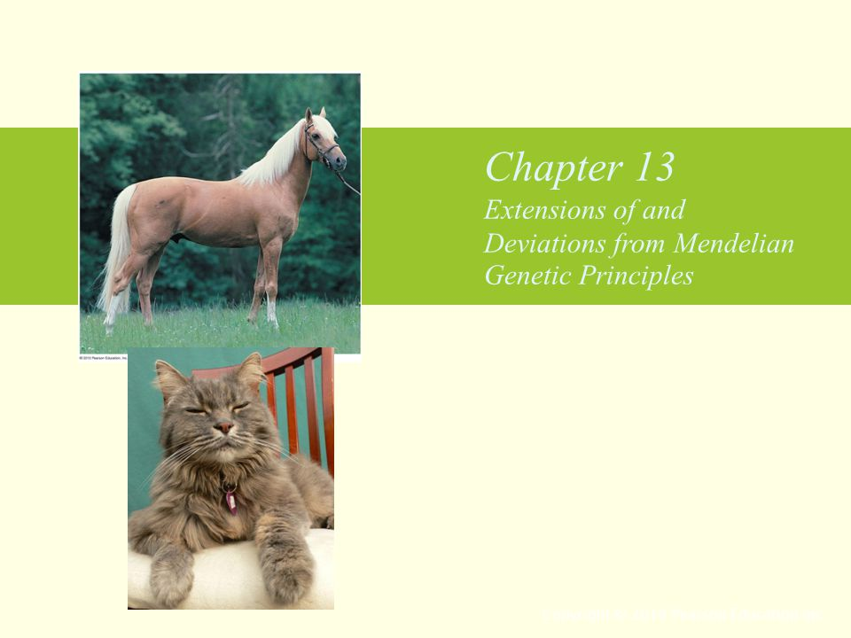 Chapter 13 Extensions of and Deviations from Mendelian Genetic Principles Copyright © 2010 Pearson Education Inc.