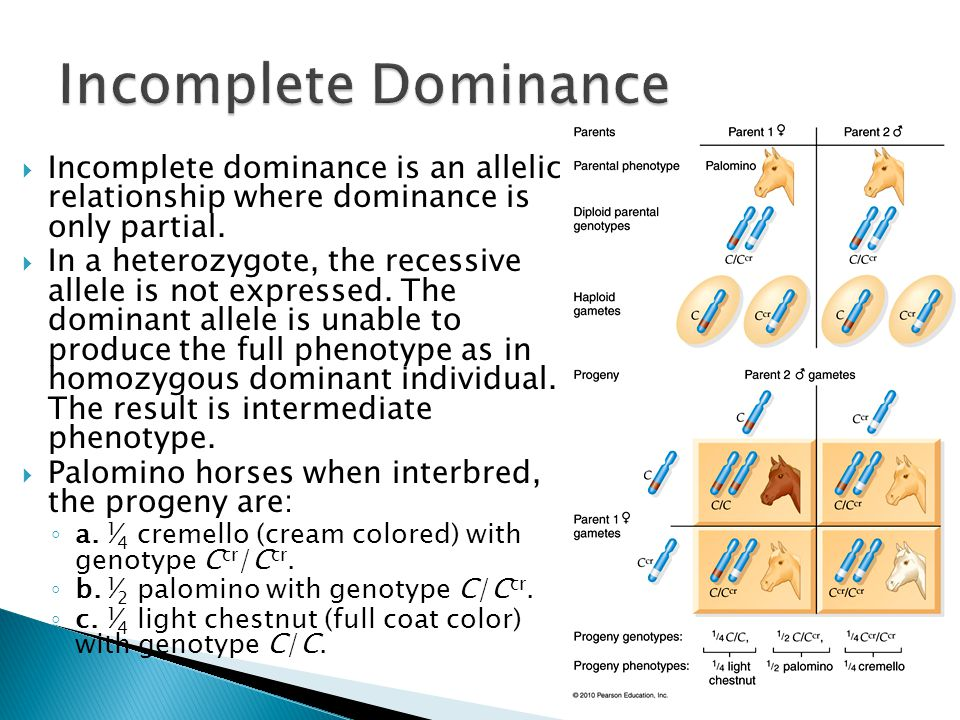  Incomplete dominance is an allelic relationship where dominance is only partial.  In a heterozygote, the recessive allele is not expressed. The dom