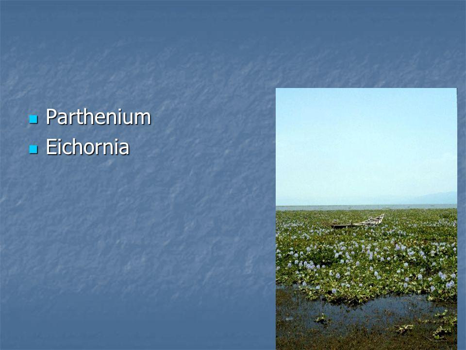 Parthenium Parthenium Eichornia Eichornia