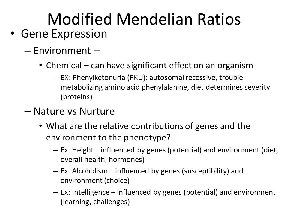 Modified Mendelian Ratios Gene Expression – Environment – Chemical – can have significant effect on an organism – EX: Phenylketonuria (PKU): autosomal