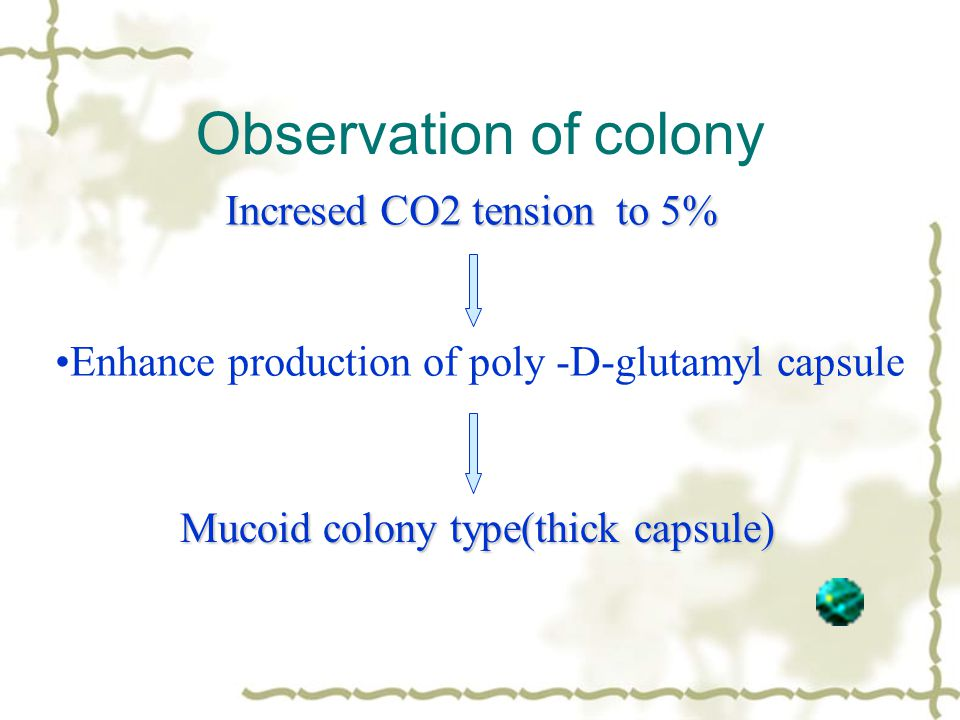 Observation of colony Enhance production of poly -D-glutamyl capsule Incresed CO2 tension to 5% Mucoid colony type(thick capsule)