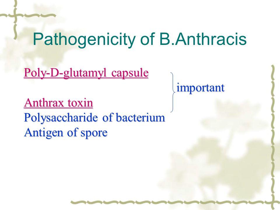 Pathogenicity of B.Anthracis Poly-D-glutamyl capsule Poly-D-glutamyl capsule important important Anthrax toxin Anthrax toxin Polysaccharide of bacteri