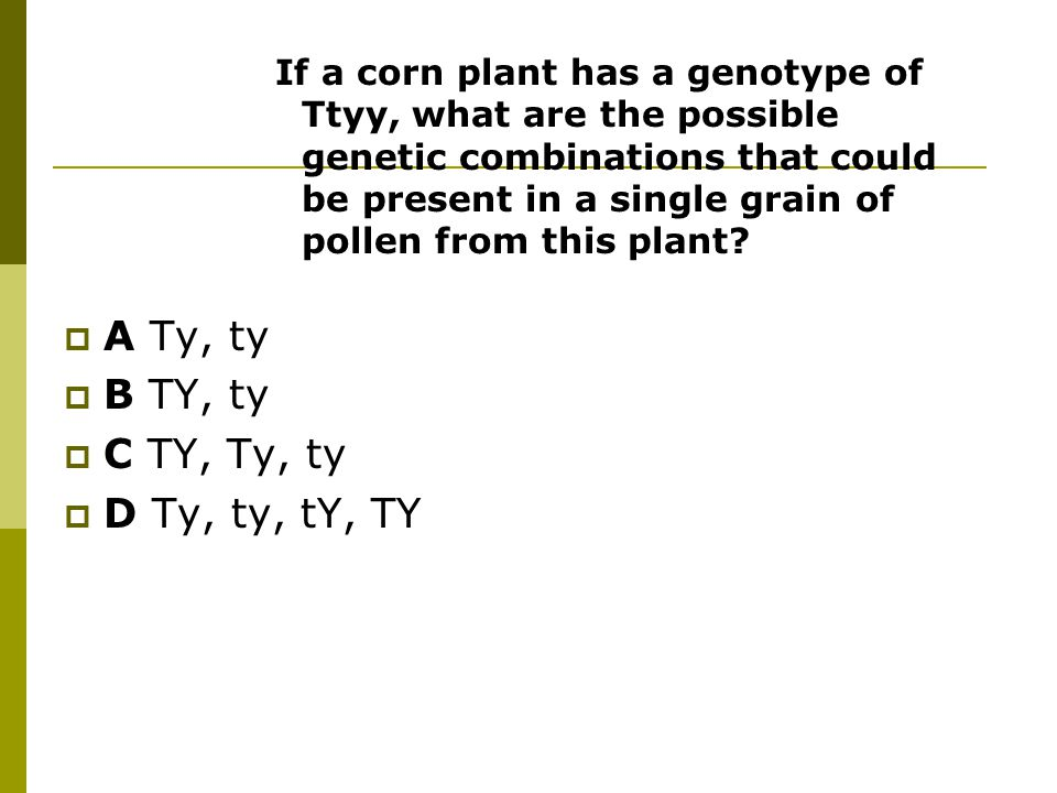 If a corn plant has a genotype of Ttyy, what are the possible genetic combinations that could be present in a single grain of pollen from this plant.