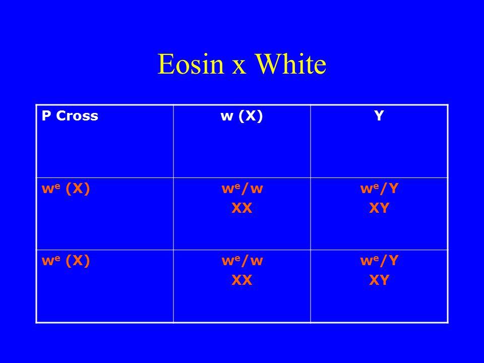 Eosin x White P Crossw (X)Y w e (X)w e /w XX w e /Y XY w e (X)w e /w XX w e /Y XY