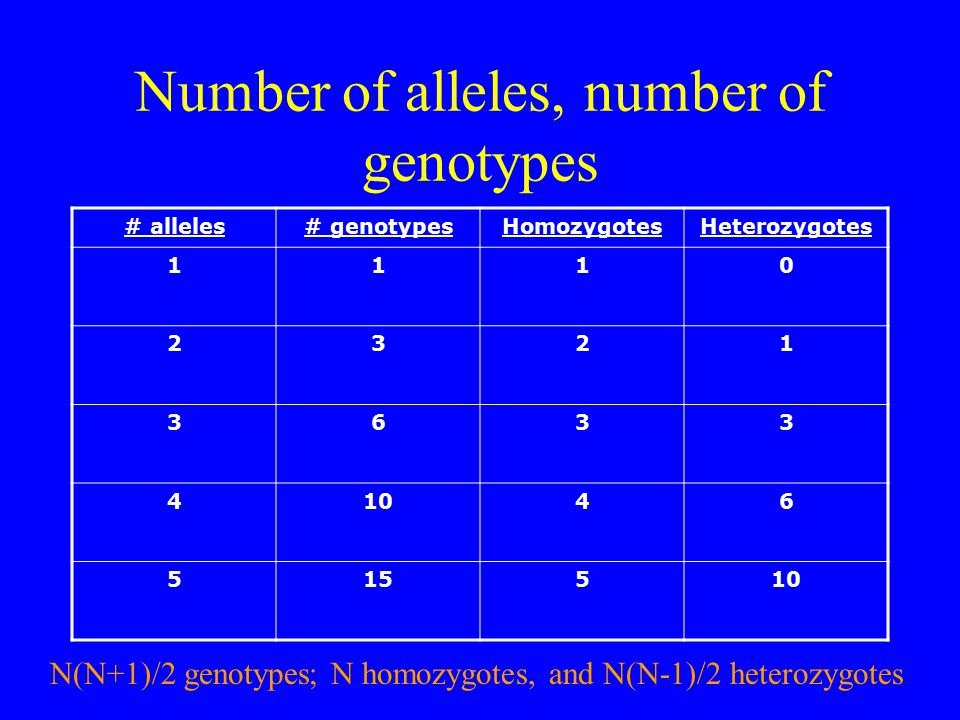 Number of alleles, number of genotypes # alleles# genotypesHomozygotesHeterozygotes 1110 2321 3633 41046 515510 N(N+1)/2 genotypes; N homozygotes, and