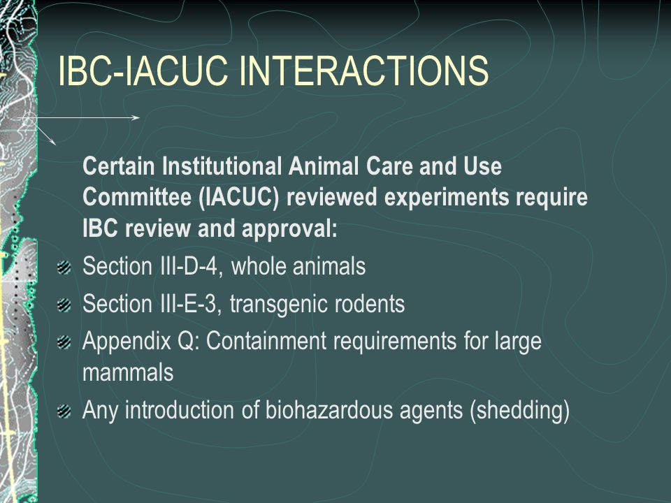 IBC-IACUC INTERACTIONS Certain Institutional Animal Care and Use Committee (IACUC) reviewed experiments require IBC review and approval: Section III-D