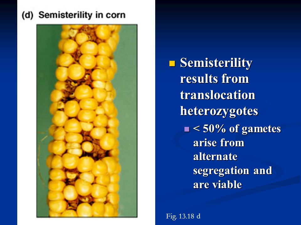 Semisterility results from translocation heterozygotes Semisterility results from translocation heterozygotes < 50% of gametes arise from alternate se