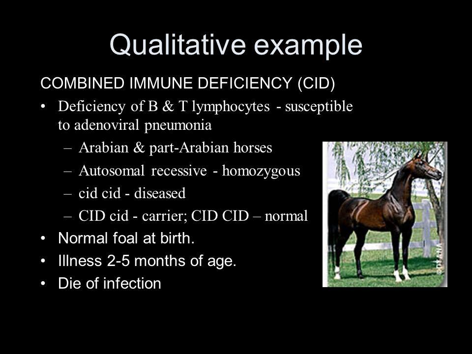 Qualitative example COMBINED IMMUNE DEFICIENCY (CID) Deficiency of B & T lymphocytes - susceptible to adenoviral pneumonia –Arabian & part-Arabian horses –Autosomal recessive - homozygous –cid cid - diseased –CID cid - carrier; CID CID – normal Normal foal at birth.