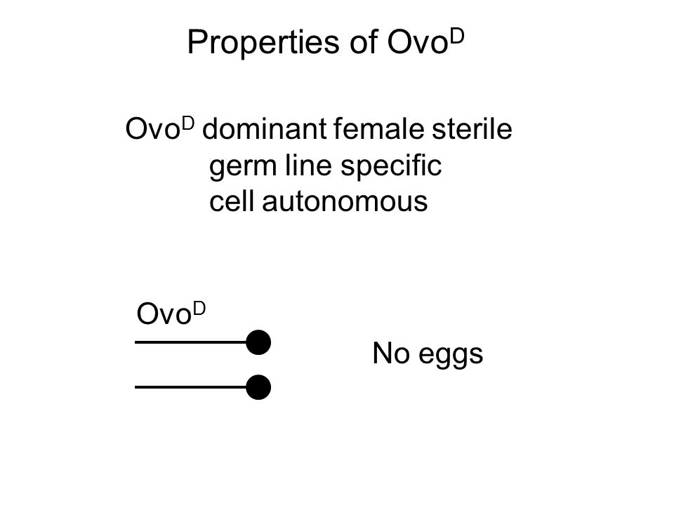 Properties of Ovo D Ovo D dominant female sterile germ line specific cell autonomous Ovo D No eggs