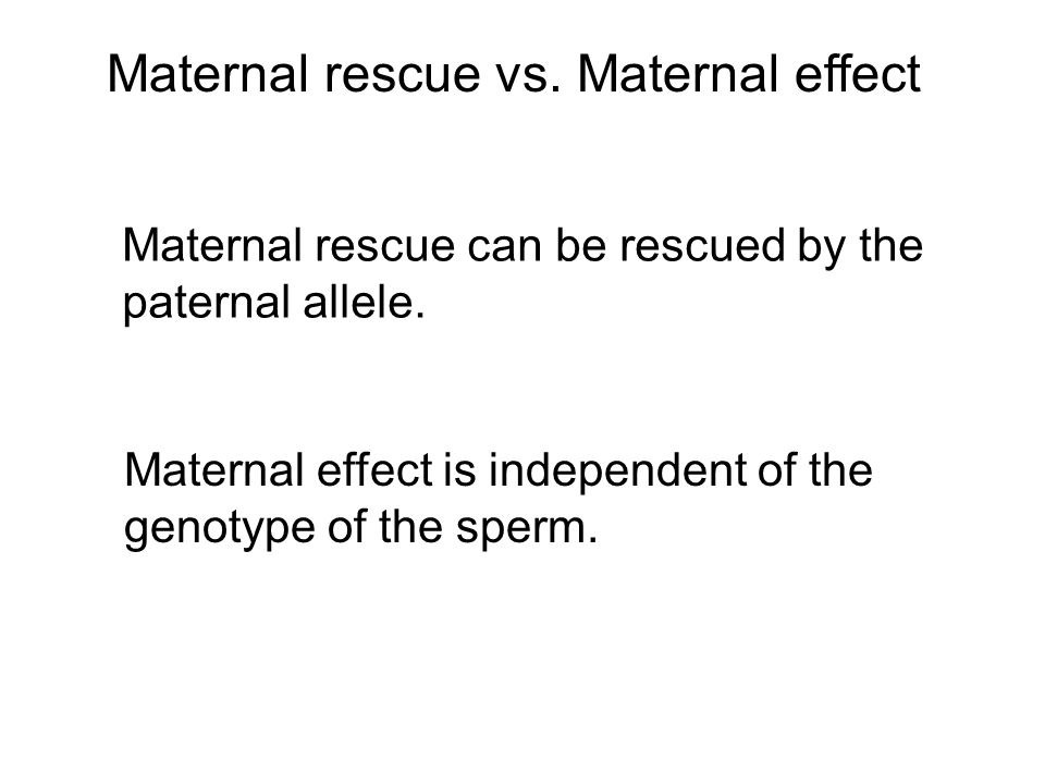 Maternal rescue vs. Maternal effect Maternal rescue can be rescued by the paternal allele.