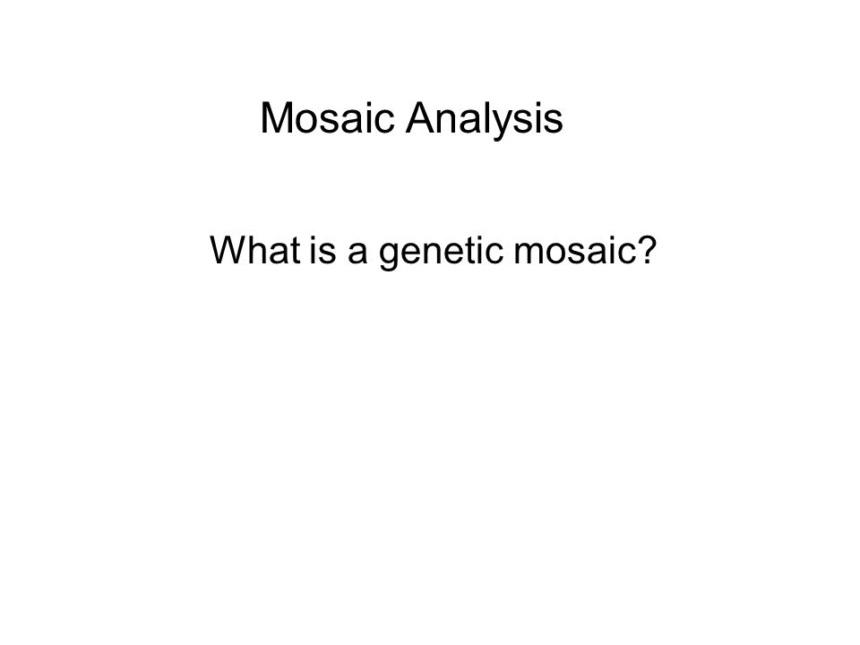 Mosaic Analysis What is a genetic mosaic?