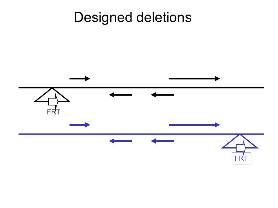 Designed deletions FRT