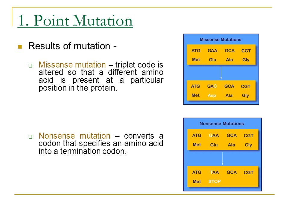1. Point Mutation Results of mutation -  Missense mutation – triplet code is altered so that a different amino acid is present at a particular positi