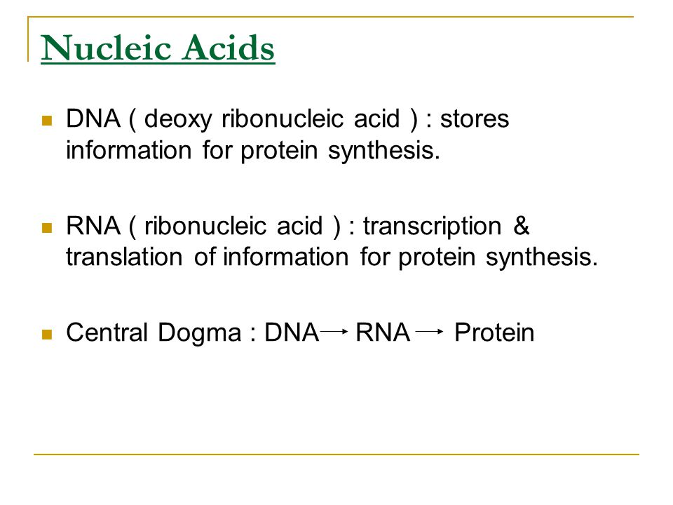 Nucleic Acids DNA ( deoxy ribonucleic acid ) : stores information for protein synthesis. RNA ( ribonucleic acid ) : transcription & translation of inf