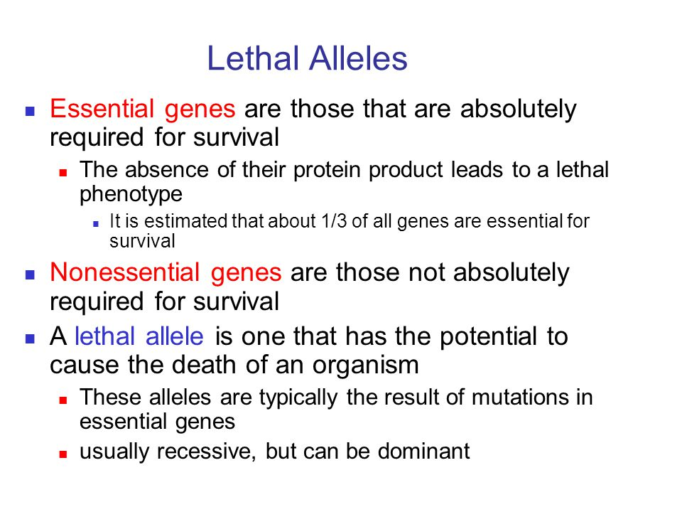 Lethal Alleles Essential genes are those that are absolutely required for survival The absence of their protein product leads to a lethal phenotype It