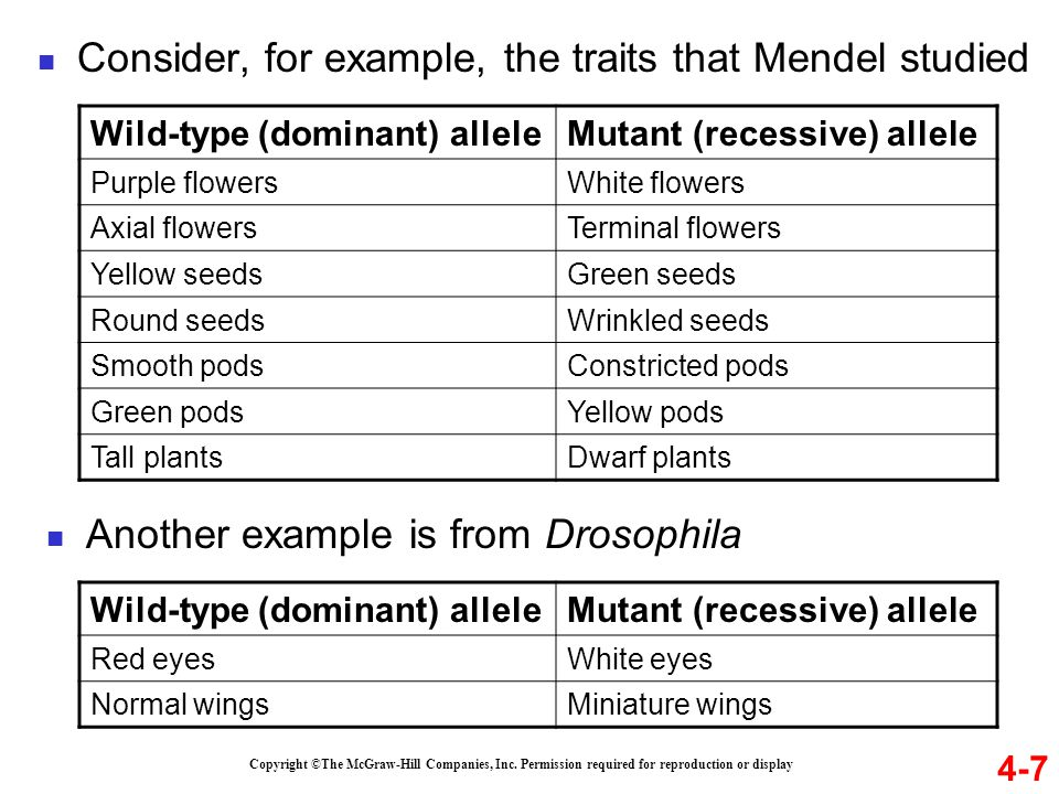4-7 Copyright ©The McGraw-Hill Companies, Inc. Permission required for reproduction or display Wild-type (dominant) alleleMutant (recessive) allele Pu