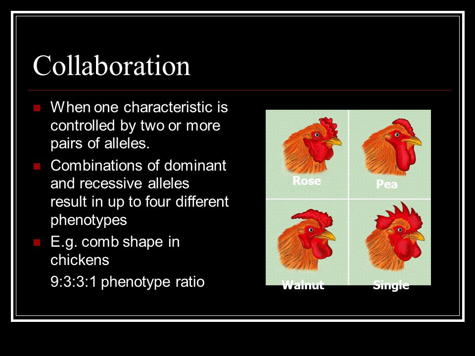 Collaboration When one characteristic is controlled by two or more pairs of alleles.