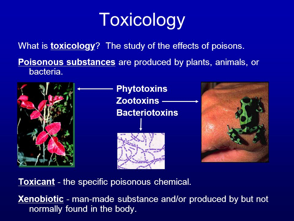 Toxicology What is toxicology? The study of the effects of poisons. Poisonous substances are produced by plants, animals, or bacteria. Phytotoxins Zoo
