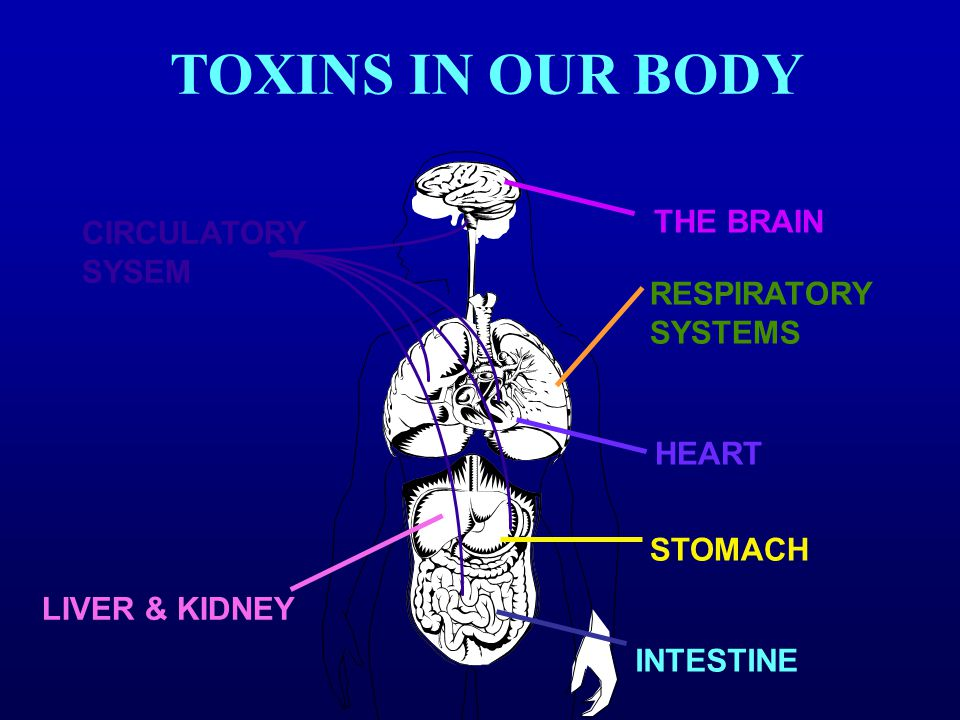 CIRCULATORY SYSEM RESPIRATORY SYSTEMS HEART STOMACH LIVER & KIDNEY INTESTINE THE BRAIN TOXINS IN OUR BODY