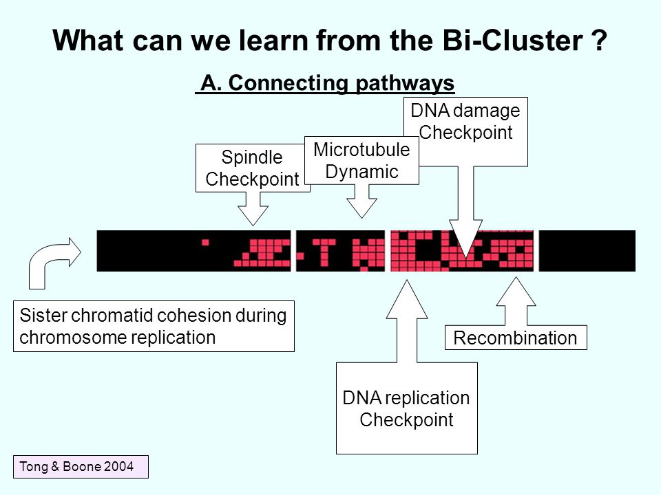 What can we learn from the Bi-Cluster .Tong & Boone 2004 A.
