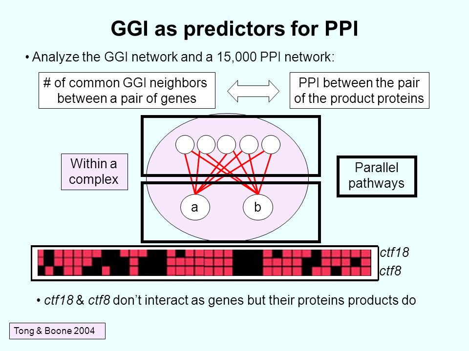 Within a complex GGI as predictors for PPI Tong & Boone 2004 Analyze the GGI network and a 15,000 PPI network: # of common GGI neighbors between a pair of genes PPI between the pair of the product proteins ctf18 ctf8 ctf18 & ctf8 don't interact as genes but their proteins products do ab Parallel pathways