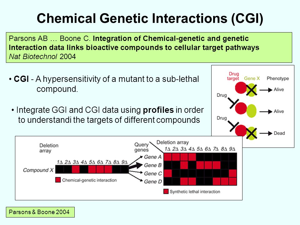 Chemical Genetic Interactions (CGI) Parsons & Boone 2004 Parsons AB … Boone C.