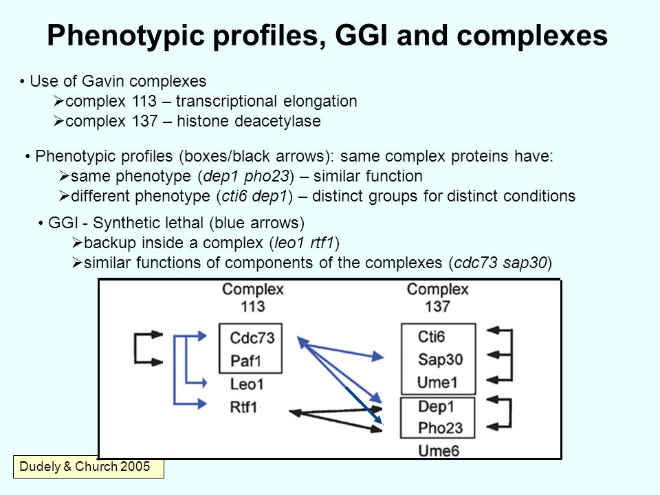 Phenotypic profiles, GGI and complexes Dudely & Church 2005 Use of Gavin complexes  complex 113 – transcriptional elongation  complex 137 – histone deacetylase Phenotypic profiles (boxes/black arrows): same complex proteins have:  same phenotype (dep1 pho23) – similar function  different phenotype (cti6 dep1) – distinct groups for distinct conditions GGI - Synthetic lethal (blue arrows)  backup inside a complex (leo1 rtf1)  similar functions of components of the complexes (cdc73 sap30)