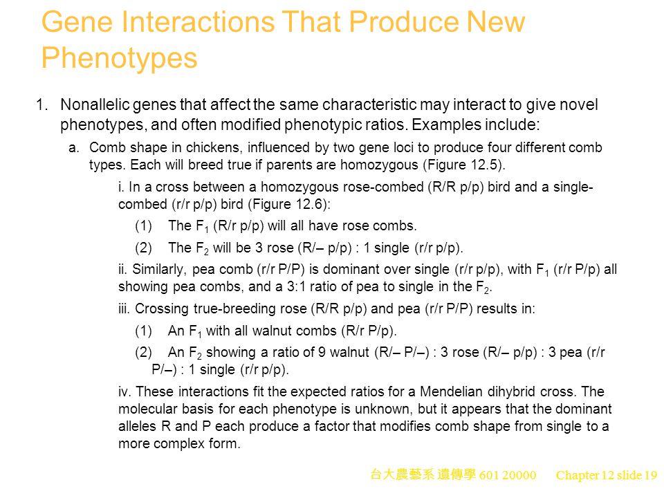 台大農藝系 遺傳學 601 20000 Chapter 12 slide 19 Gene Interactions That Produce New Phenotypes 1.Nonallelic genes that affect the same characteristic may interact to give novel phenotypes, and often modified phenotypic ratios.