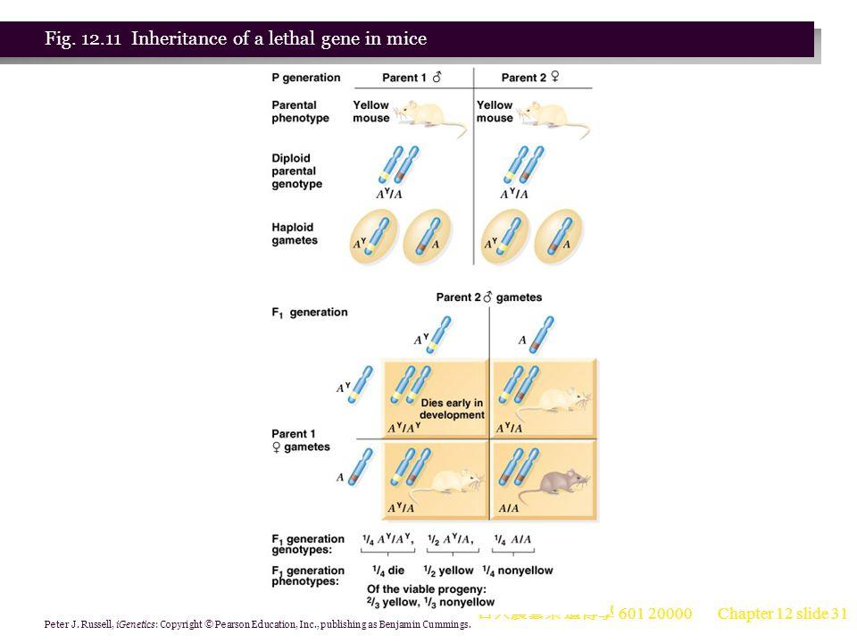 台大農藝系 遺傳學 601 20000 Chapter 12 slide 31 Peter J.