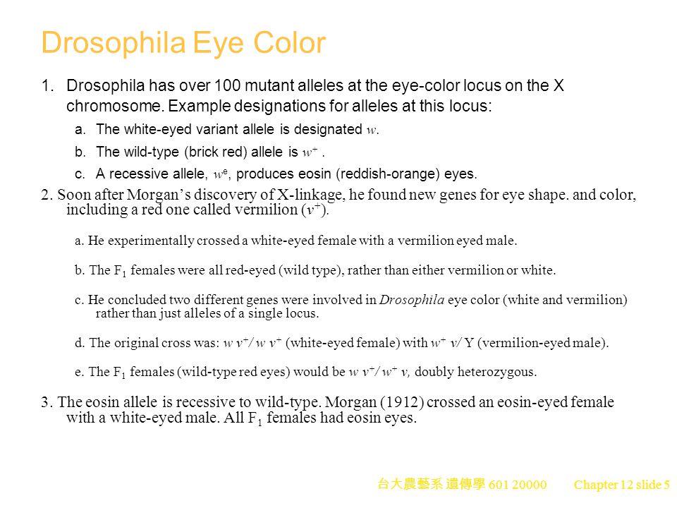 台大農藝系 遺傳學 601 20000 Chapter 12 slide 5 Drosophila Eye Color 1.Drosophila has over 100 mutant alleles at the eye-color locus on the X chromosome.