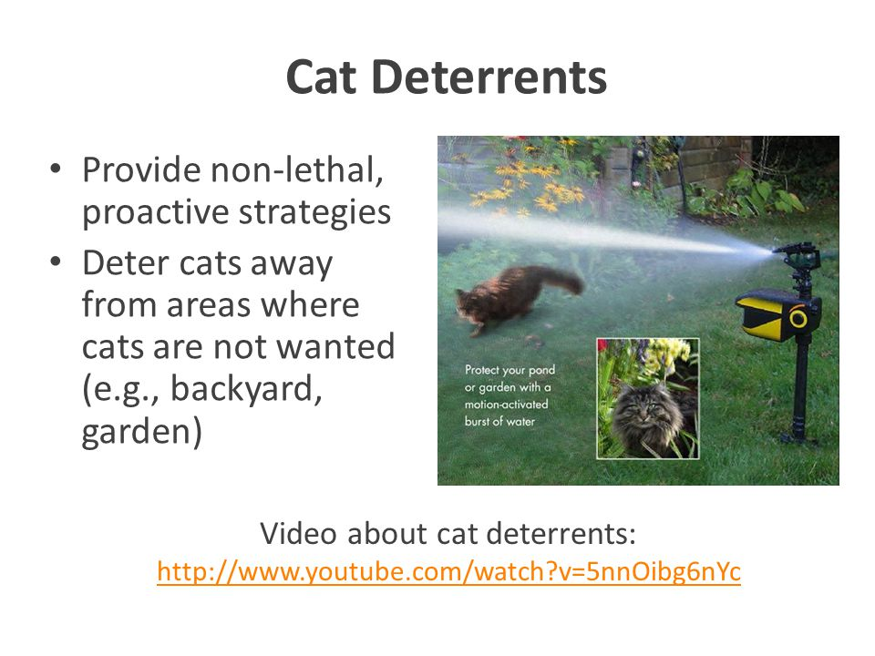 Cat Deterrents Provide non-lethal, proactive strategies Deter cats away from areas where cats are not wanted (e.g., backyard, garden) Video about cat deterrents: http://www.youtube.com/watch v=5nnOibg6nYc