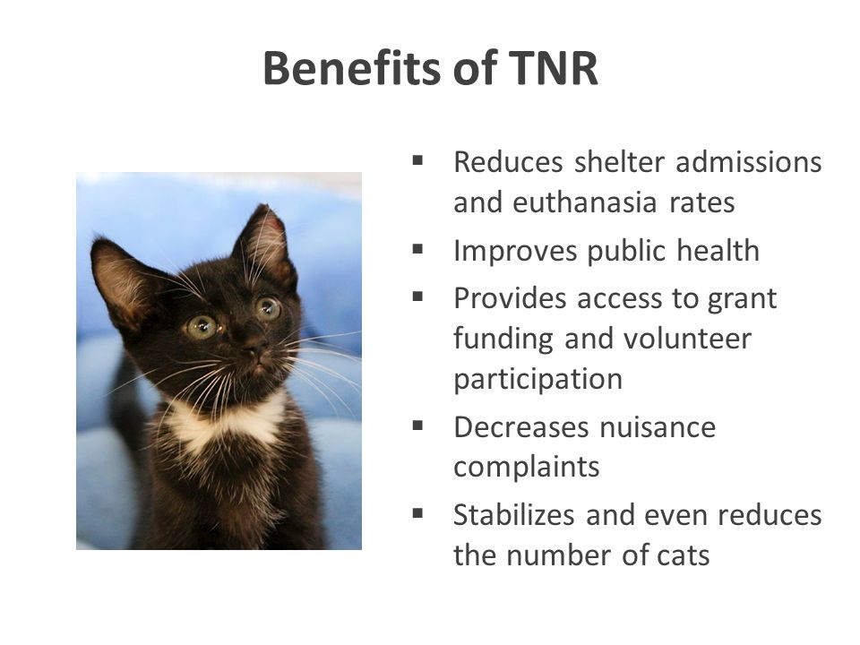 Benefits of TNR  Reduces shelter admissions and euthanasia rates  Improves public health  Provides access to grant funding and volunteer participation  Decreases nuisance complaints  Stabilizes and even reduces the number of cats