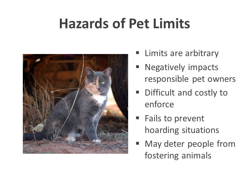 Hazards of Pet Limits  Limits are arbitrary  Negatively impacts responsible pet owners  Difficult and costly to enforce  Fails to prevent hoarding situations  May deter people from fostering animals