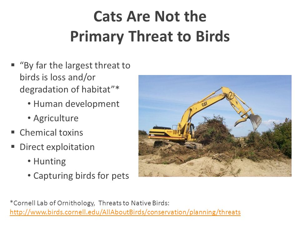 Cats Are Not the Primary Threat to Birds  By far the largest threat to birds is loss and/or degradation of habitat * Human development Agriculture  Chemical toxins  Direct exploitation Hunting Capturing birds for pets *Cornell Lab of Ornithology, Threats to Native Birds: http://www.birds.cornell.edu/AllAboutBirds/conservation/planning/threats http://www.birds.cornell.edu/AllAboutBirds/conservation/planning/threats