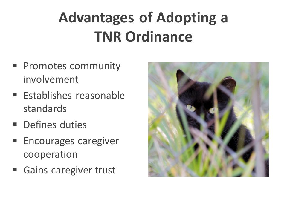 Advantages of Adopting a TNR Ordinance  Promotes community involvement  Establishes reasonable standards  Defines duties  Encourages caregiver coo