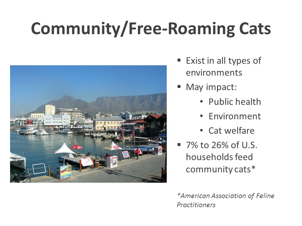 Existing Resources in (insert name of city/town/or county) Compile a list of all resources available to support TNR of free-roaming cats: Funding Existing programs Volunteers Cooperative agreements Etc.