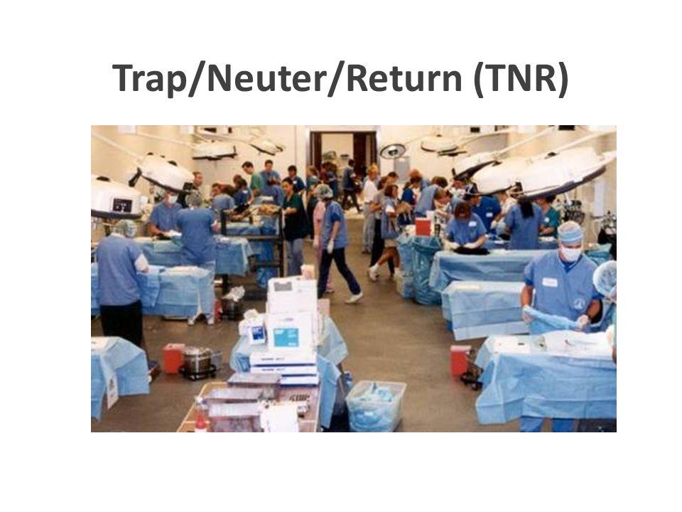 Trap/Neuter/Return (TNR)