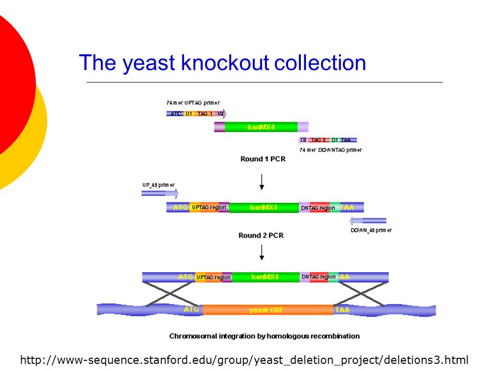The yeast knockout collection http://www-sequence.stanford.edu/group/yeast_deletion_project/deletions3.html