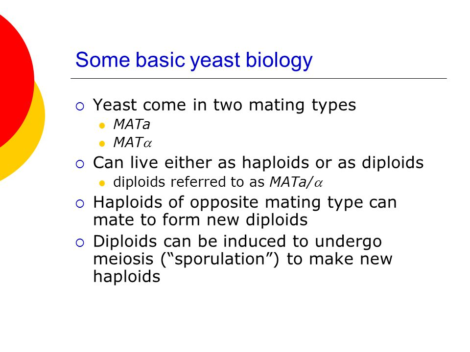 Some basic yeast biology  Yeast come in two mating types MATa MAT  Can live either as haploids or as diploids diploids referred to as MATa/  Haploids of opposite mating type can mate to form new diploids  Diploids can be induced to undergo meiosis ( sporulation ) to make new haploids