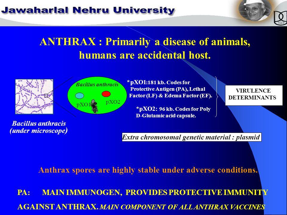 pXO1 pXO2 Bacillus anthracis *pXO1 :181 kb.