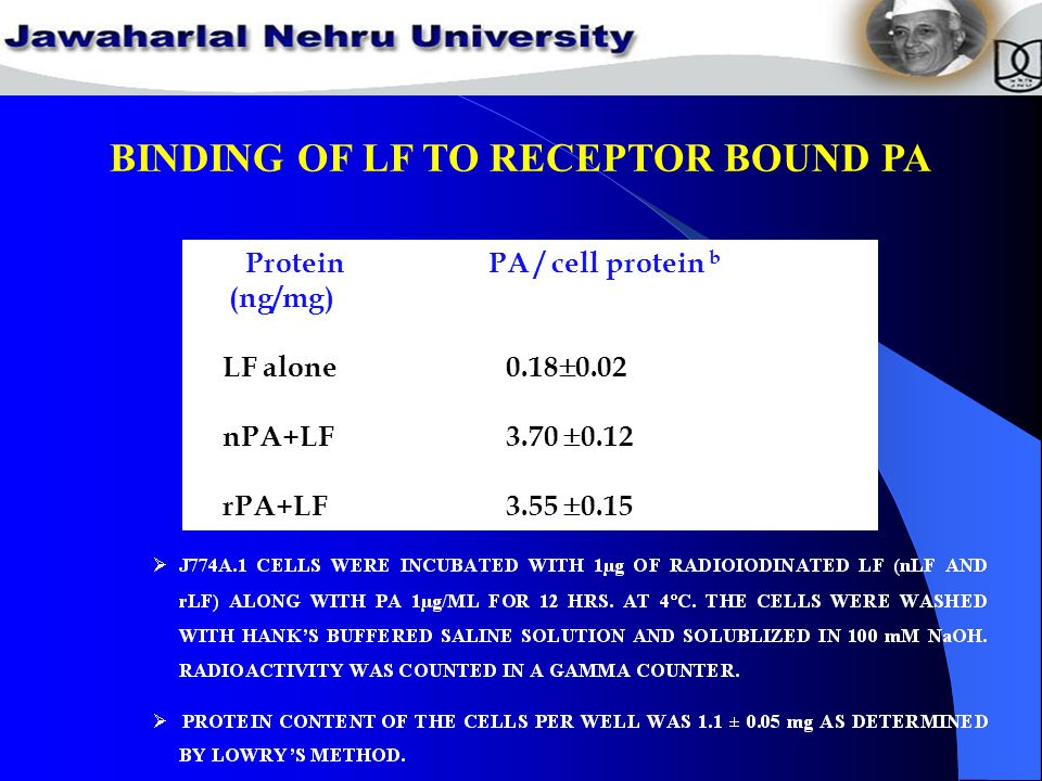 BINDING OF LF TO RECEPTOR BOUND PA Protein PA / cell protein b (ng/mg) LF alone 0.18  0.02 nPA+LF 3.70  0.12 rPA+LF 3.55  0.15